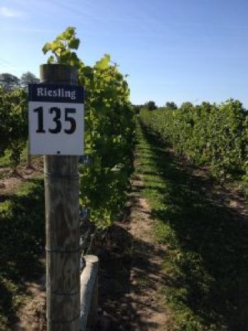 riesling-vineyard-post-sign-at-3-bros; Finger Lakes Wine Alliance