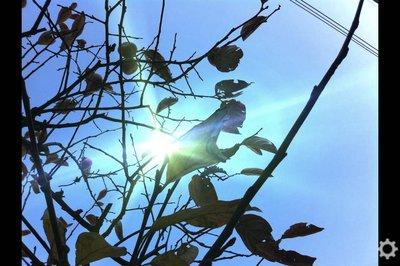 app_photo_lensflare_8.jpg