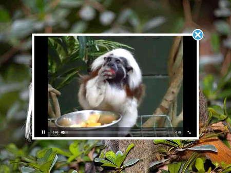 app_edu_mini_adventures_animals_6.jpg