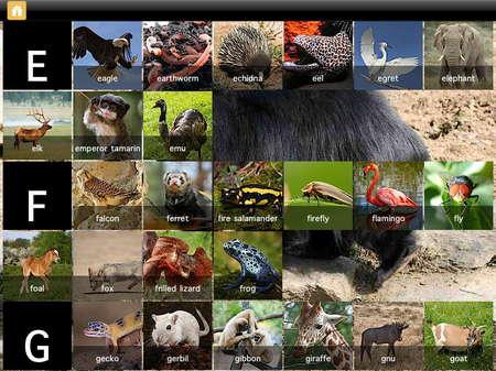 app_edu_mini_adventures_animals_7.jpg