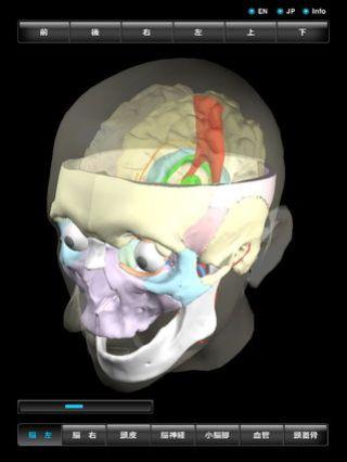 app_med_3d_head_4.jpg