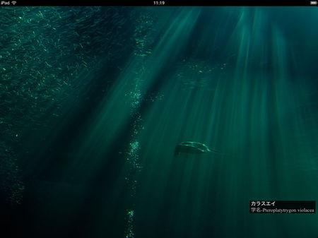 app_photo_aquamarine_fukushima_1.jpg