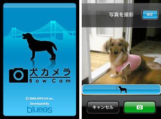 app_photo_dog_1.jpg