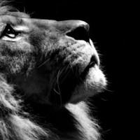 Do You Ever Picture God As A Lion?
