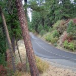 Spokane Centennial trail winds through pine forests
