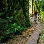 bike trail in New Zealand