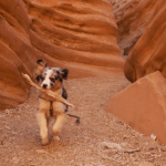 Kangaroo the Dog Does Little Wild Horse Canyon