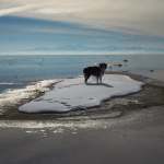 Little Dog, Great Lake