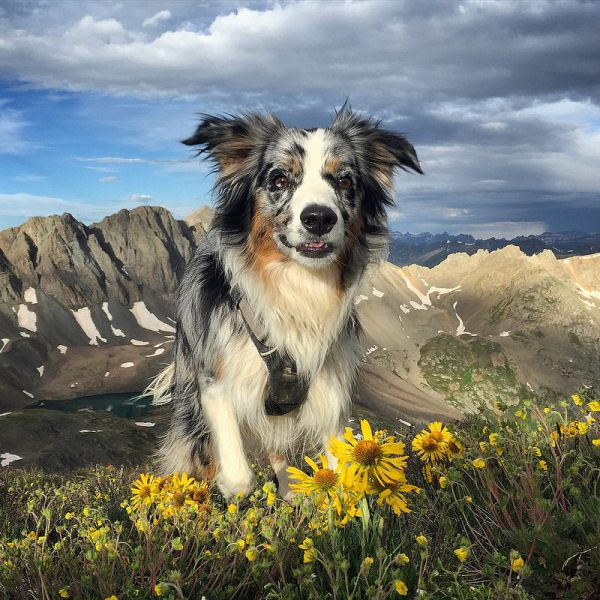 Dog Friendly Silverton Trails