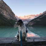 A Canadian National Parks Whirlwind Tour
