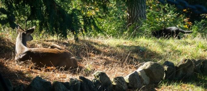 2016-10-backyard-critters-1