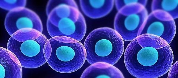 cells3