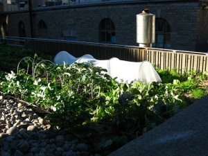 Make sure your rooftop garden can take all the weight of the plants, plus any other materials and water absorption.