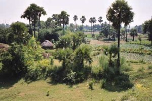 Sujata village haystacks