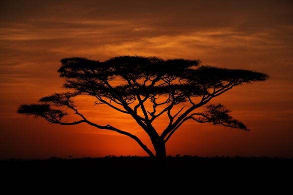 Michael-Bonocore-Serengeti-Sunrise
