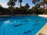 Attraktion, Touristenattraktion, Sehenswürdigkeit, Delfine, Dolphine Resort, The Mirage, Siegfried und Roy