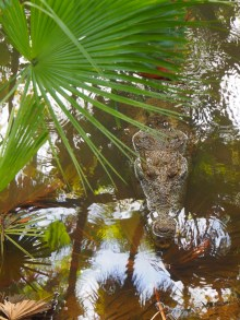 Belize, Belize City Zoo, Zentralamerika, Lateinamerika, Südamerika, Reise, reisen, Einsteiger, Anfänger, Einsteigerland, Tipps, Sehenswürdigkeiten, was erwartet mich, worauf muss ich achten, Sehenswert, Tourist, Tourismus, Historisch, Kultur, Zoo, Inseln, Paradies, Dschungel
