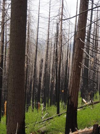 Waldbrandschäden