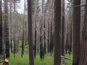 2013, Waldbrand, Schäden, Yosemite
