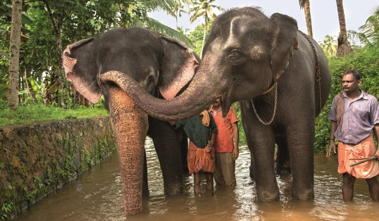 Experiencing an Elephant Camp in Kerala