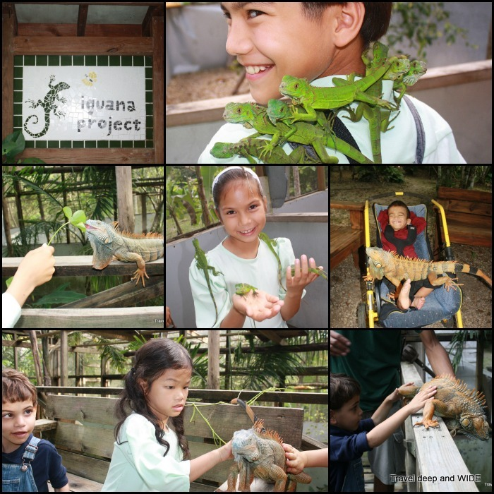 Iguana Project in Belize
