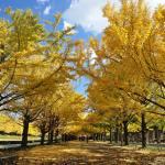 昭和記念公園の紅葉。2015年の見頃は11月上旬から。駐車場もご紹介。