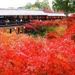 東福寺の紅葉!2015年の見頃は11月下旬から!ライトアップは東福寺塔頭の勝林寺と天得院で。