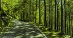 roads of lansdowne