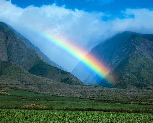 Maui Rainbows