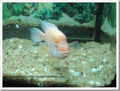 Aquarium - KRS