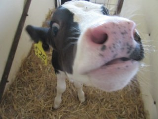 A Farm Tour in Christian County