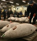 Early morning at the famous tuna auction. Photo: Erik Bergin