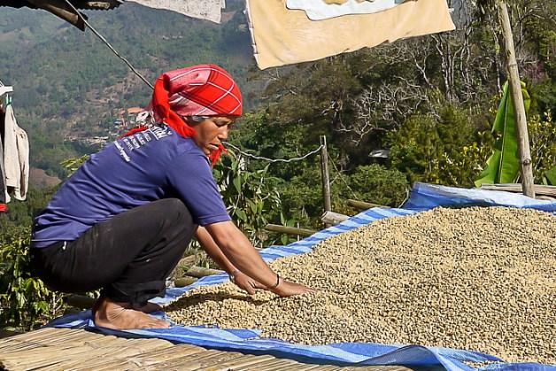 akha coffee beans