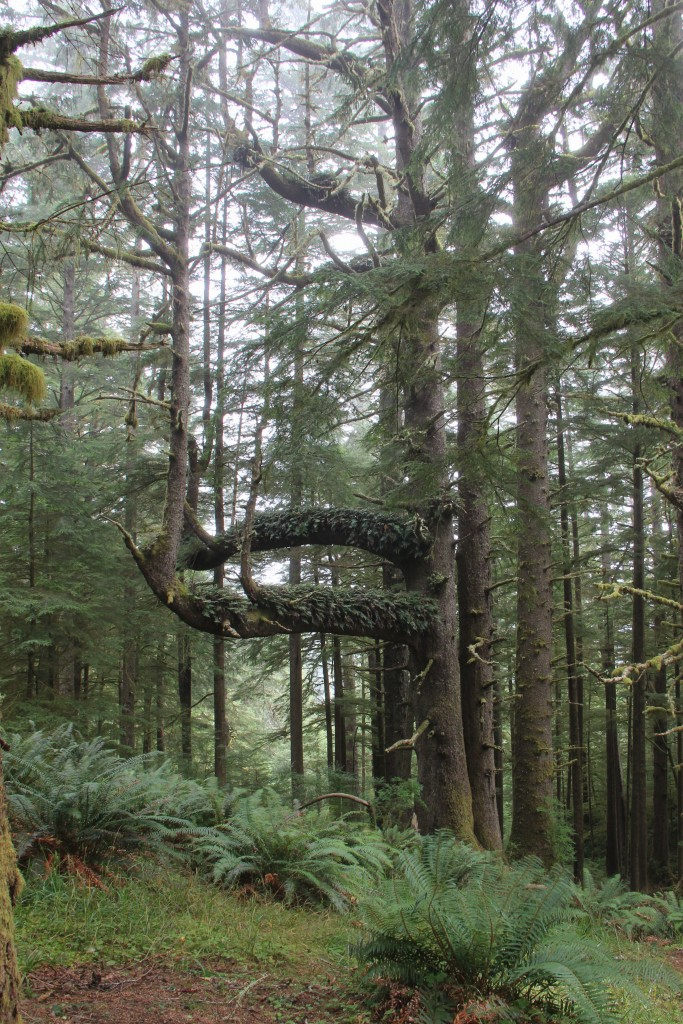 ecola-state-park-7