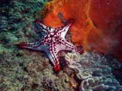 Fab Photos Friday: Starfish Creature Feature!
