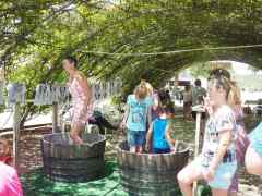 Have You Ever Been to a Grape Stomp? Amazing fun!