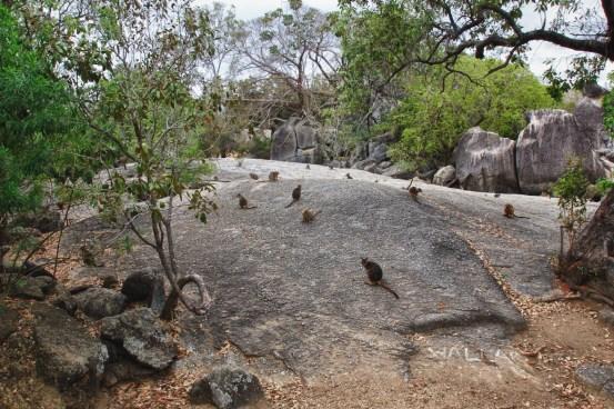 Granite Gorge (1 of 6)