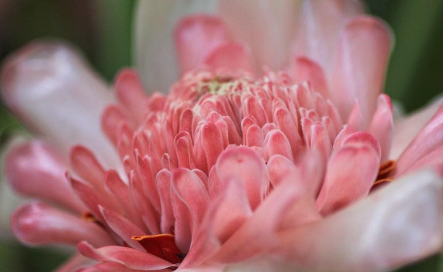 Cairns Botanic Garden  (28 of 34)