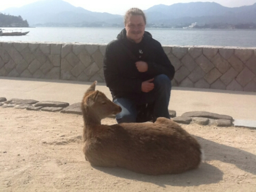 Deer roam freely in Miyajima