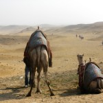 Egyptian-Camels-Travel-Xena