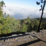 Tenerife Evergreen Trees on TravelXena.com