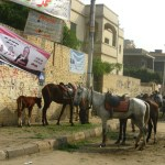 Driving-in-Cairo-Egypt-Misr-horses-Travel-Xena