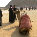 Egypt-Giza-Egyptian-Camel-Travel-Xena