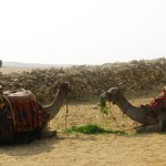Egypt-Giza-Egyptian-Camels-Travel-Xena