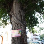Nassau-Bahamas-Tree-TravelXena