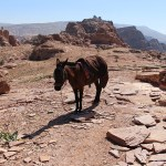 Petra_Jordan_Middle_East_TravelXena_103