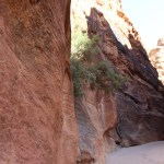 Petra_Jordan_Middle_East_TravelXena_238