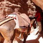 Petra_Jordan_Middle_East_TravelXena_4