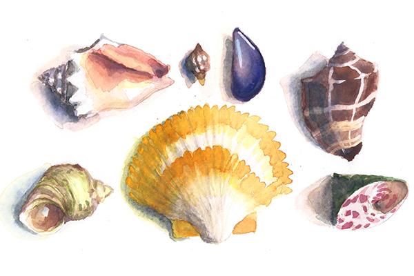 Rachel Linquist - seashells - 600x400 thumbnail