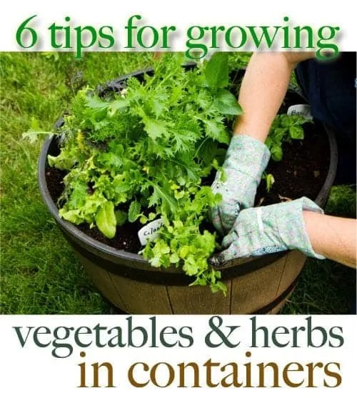 Gardening Pinterest